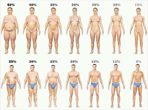 Определение процента жировой ткани кето
