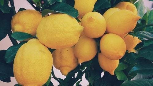 ферментировать апельсин?